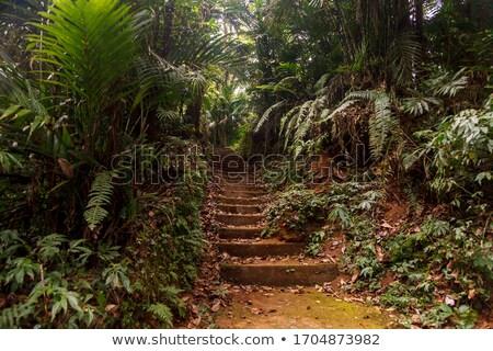 Botanikus kert Bali gyönyörű tájkép elképesztő Stock fotó © Anna_Om