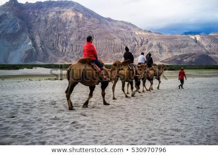 Sand dunes in Nubra valley, Ladakh Stock photo © dmitry_rukhlenko