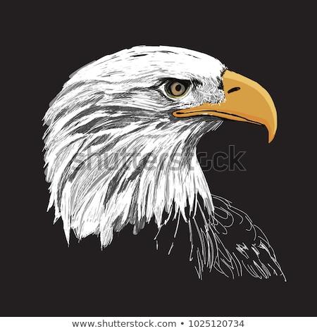 Aigle tête design oiseau plumes liberté Photo stock © nezezon