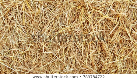 straw background stock photo © homydesign