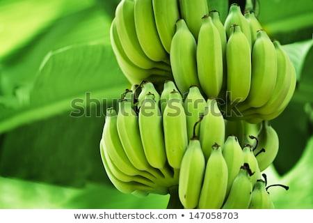 Bunches Of Green Unripe Bananas Stock fotó © pzAxe