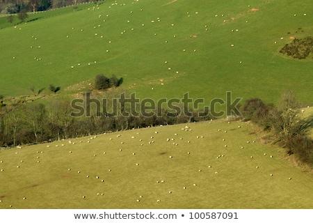 Birka mezők oldal domb Wales fű Stock fotó © latent