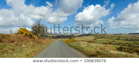 Narrow country road panorama, Mynydd Epynt, Wales UK. Stock photo © latent