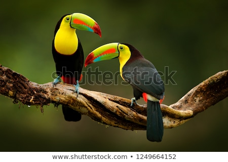 Aves Cartoon fondo verano diversión negro Foto stock © dagadu
