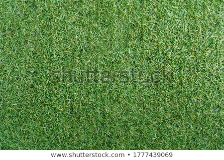 Green grass texture and word baseball Stock photo © IvicaNS