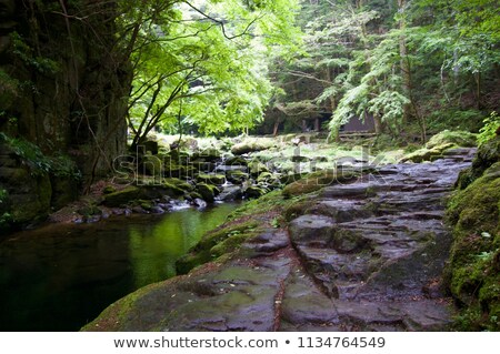 mossy rock formation Stock photo © prill