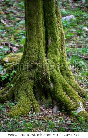 mossy cover of vegetation Stock photo © prill