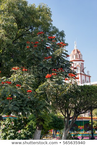 Church Steeple Beyond Tropical Trees Stock photo © dbvirago