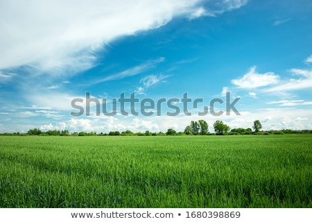 Stock photo: Spring green field
