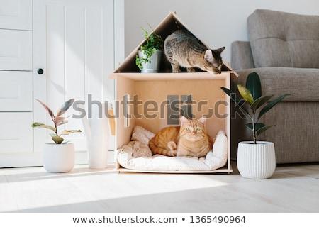 Ház macska közelkép portré három színes Stock fotó © nailiaschwarz
