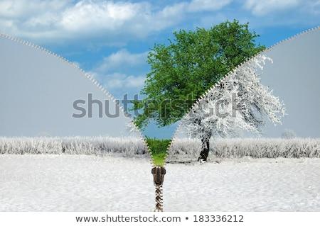 Zipper and rural summer landscape Stock photo © ajt