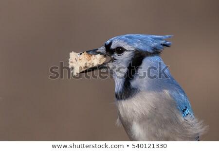 Yalıtılmış ekmek gaga avrupa gıda doğa Stok fotoğraf © taviphoto