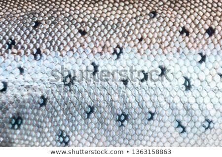 魚 · 皮膚 · テクスチャ · 写真 · クローズアップ - ストックフォト © jonnysek