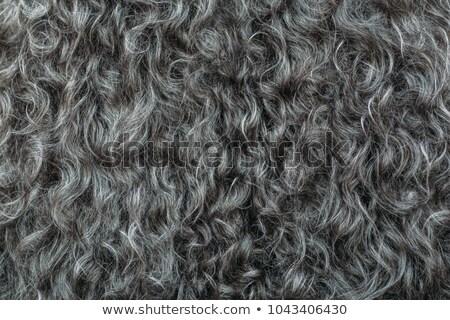 Dark sheep hair Stock photo © smithore