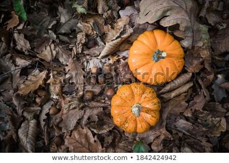Foto d'archivio: Maturo · zucca · asciugare · caduta · foglie