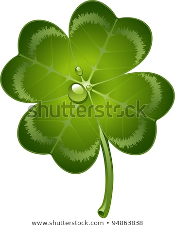 Clover Leaves With Drops Of Dew Lucky Clover Leaf Four Leaf And Trifoliate Clover Foto d'archivio © jara3000