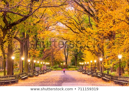 Fall in Central Park Stock photo © rmbarricarte