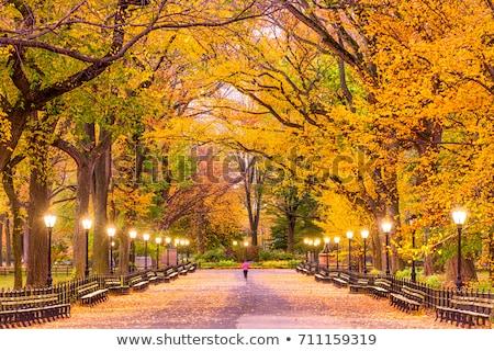 осень · Центральный · парк · газона · замок · один - Сток-фото © rmbarricarte