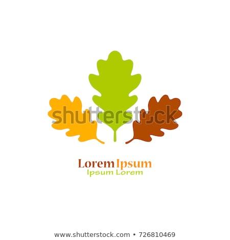 дуб дерево лист оранжевый осень Сток-фото © DedMorozz