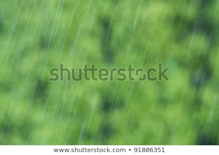 Gotas de chuva caindo sobre fundo verde desfocado Foto stock © tarczas