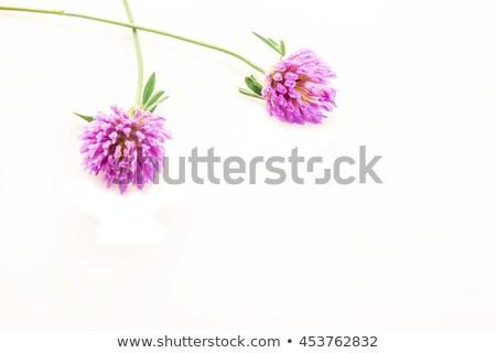 赤 · クローバー · 白 · 花 · 春 · 草 - ストックフォト © marimorena