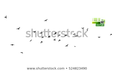 flock of birds flying in sky Stock photo © lostation