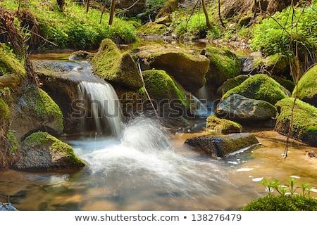 Foto stock: Rio · floresta · água · primavera · folha · beleza