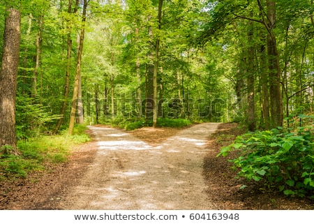 Forest crossroads Stock photo © ondrej83