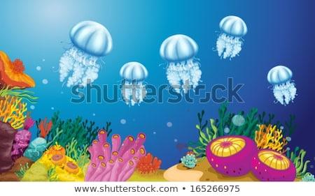 óceán jelenet meduza vízalatti illusztráció természet Stock fotó © bluering
