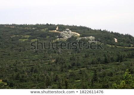 Giant mountains near Poland and Czech Stock photo © Massonforstock