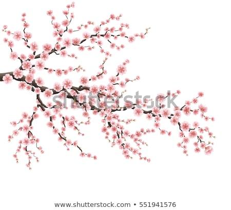cseresznyevirág · valósághű · szalag · eps · 10 · sakura - stock fotó © beholdereye