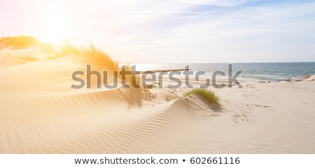 sand dunes and sea in Holland Stock photo © compuinfoto