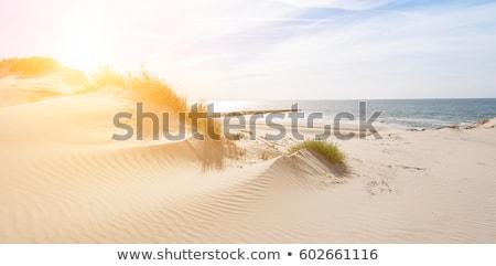 holland · zand · nederlands · kust · gras · zon - stockfoto © compuinfoto