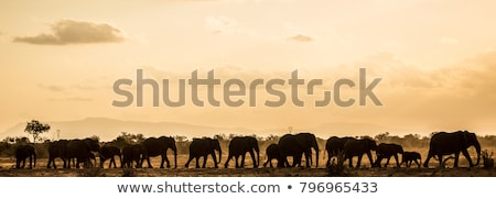 africano · criança · pôr · do · sol · ilustração · natureza · viajar - foto stock © adrenalina