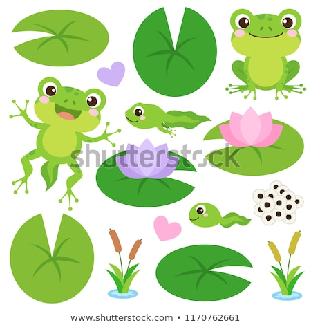 frogs on water lily Stock photo © adrenalina