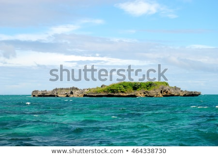 Crocodile on the island Stock photo © bluering