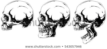 Skull profile isolated. head of skeleton. Vector illustration Stock photo © popaukropa