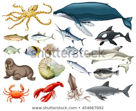 Different types of sea animals on white Stock photo © bluering