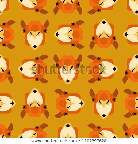 Wielbłąda front zwierząt bestia pustyni projektu Zdjęcia stock © popaukropa