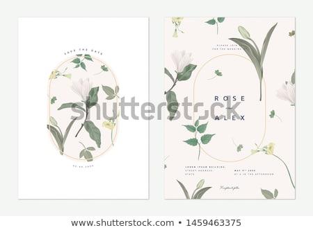 vektör · halkalar · yalıtılmış · beyaz · çiçek - stok fotoğraf © milsiart