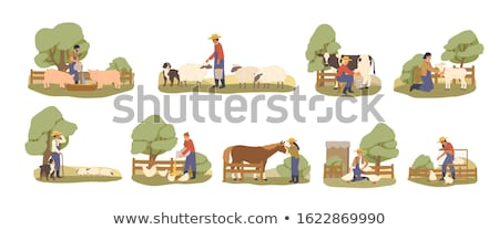 Pig and Domestic Hen on Hay Vector Illustration Stock photo © robuart