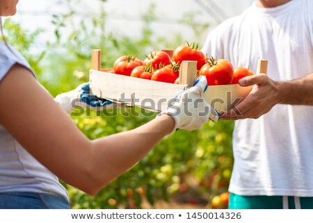 Jardinero tomates hortalizas mujer industria Foto stock © Kzenon