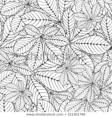 Illustration · Wald · Blätter · Karikatur · frischen · Nüsse - stock foto © angelsimon
