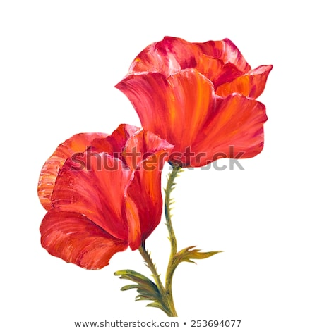 Gently poppies on the canvas.  Stock photo © lypnyk2