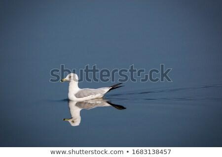 crimson lake alberta canada stock photo © pictureguy