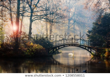 Stock photo: brown tree fog in green nature