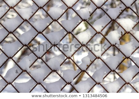 wire metal fence and fir tree texture Stock photo © sirylok