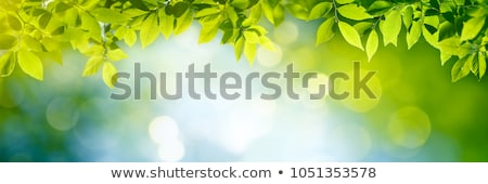 Stock photo: Green Leaves in the Sky