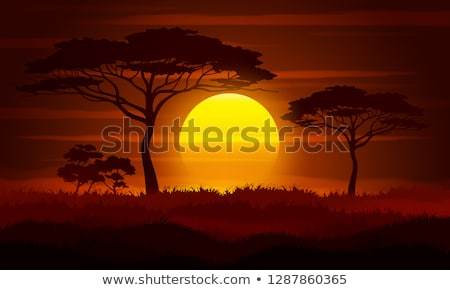 Foto stock: África · sabana · puesta · de · sol · aves · África