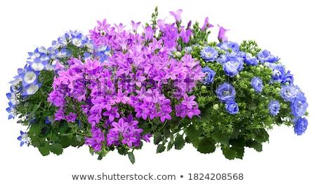 paar · bloemen · intiem · sensueel - stockfoto © dolgachov